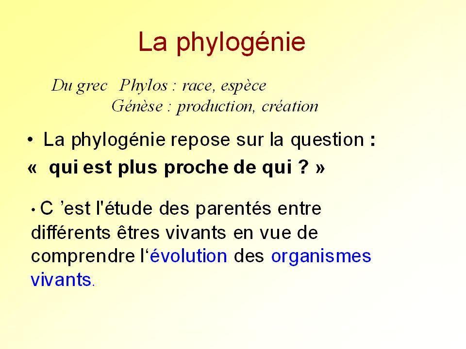SQu'est-ce que la phylogénie