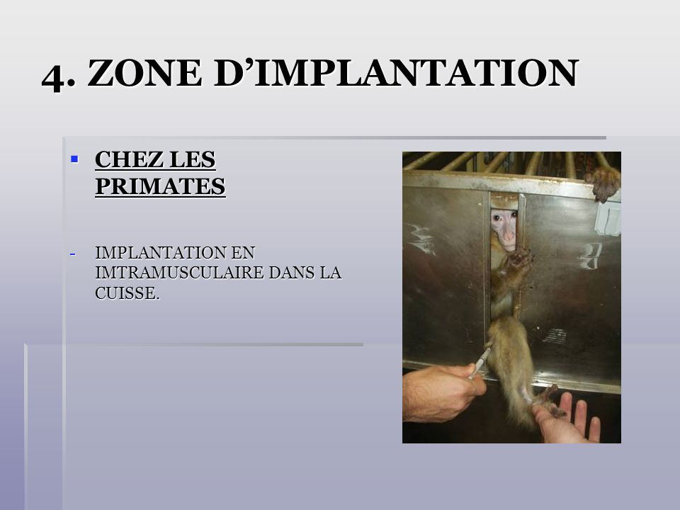 4. ZONE D'IMPLANTATION CHEZ LES PRIMATES
