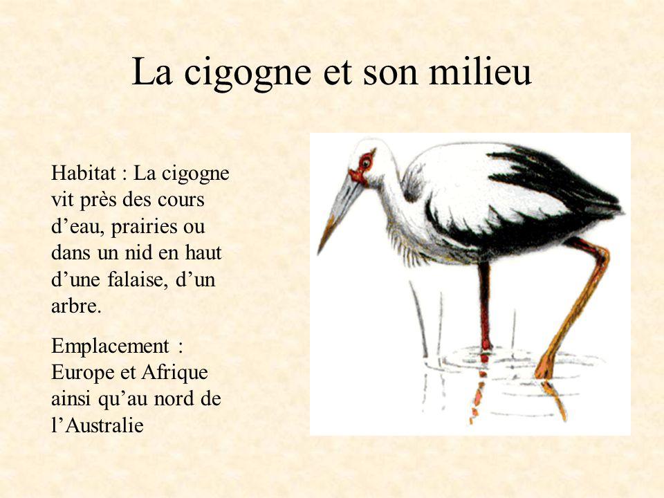 La cigogne et son milieu