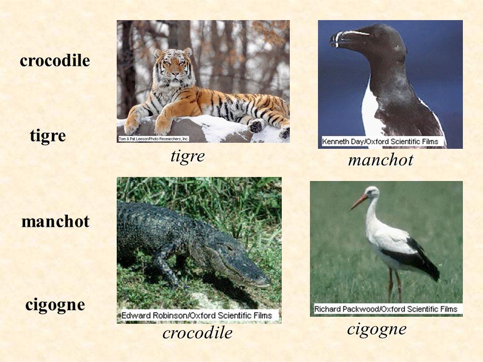 crocodile tigre tigre manchot manchot cigogne cigogne crocodile
