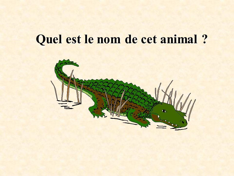 Quel est le nom de cet animal