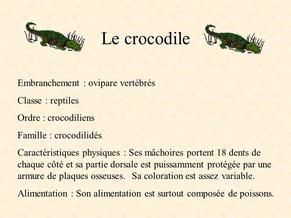 Le crocodile Embranchement : ovipare vertébrés Classe : reptiles