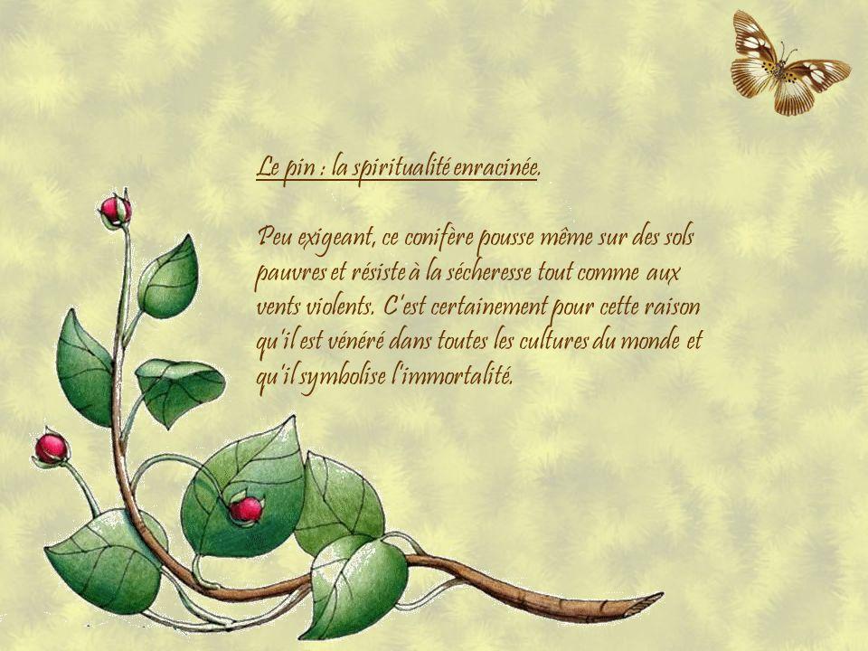 Le pin : la spiritualité enracinée.