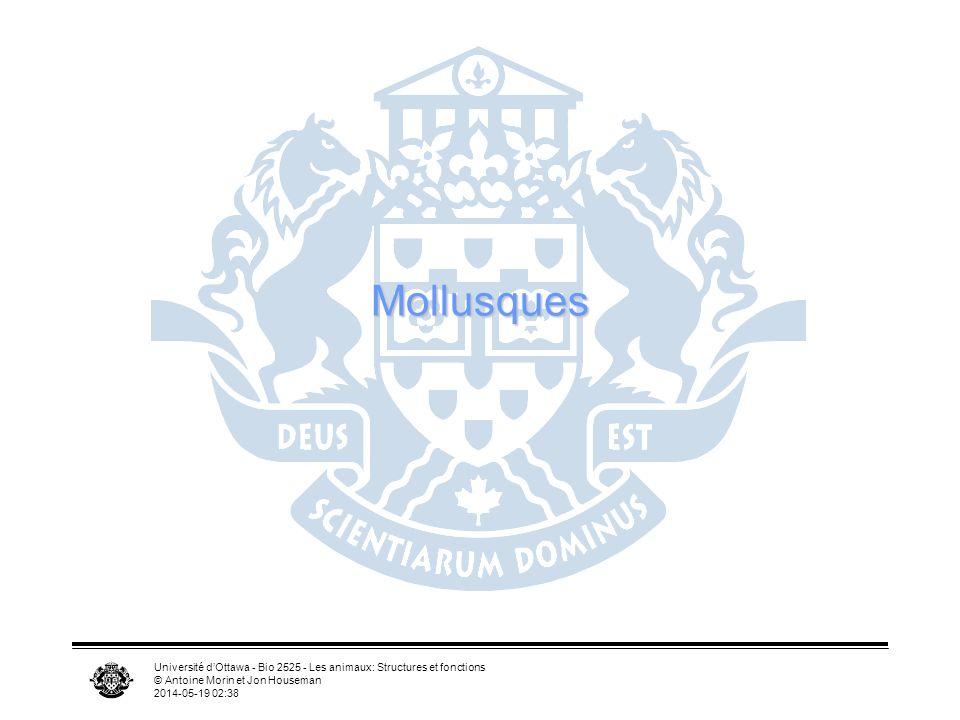 Mollusques Université d'Ottawa - Bio 2525 - Les animaux: Structures et fonctions. © Antoine Morin et Jon Houseman.