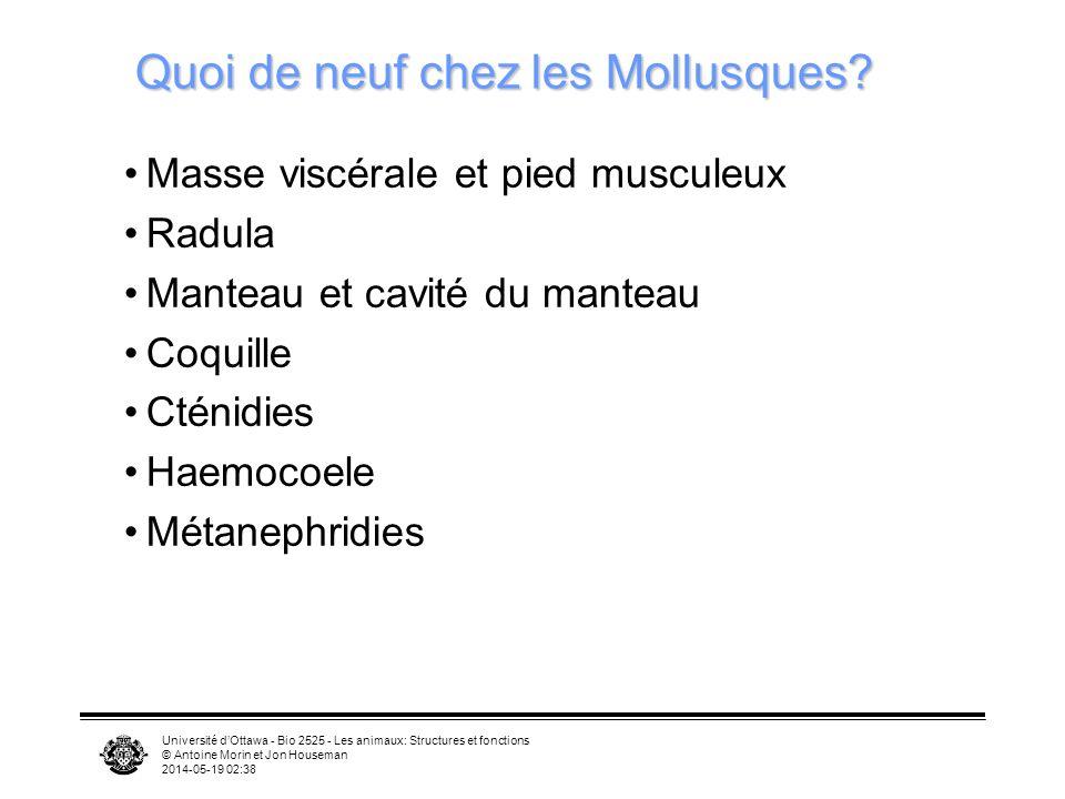 Quoi de neuf chez les Mollusques