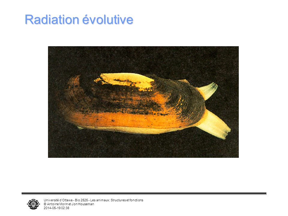 Radiation évolutive Université d'Ottawa - Bio 2525 - Les animaux: Structures et fonctions. © Antoine Morin et Jon Houseman.