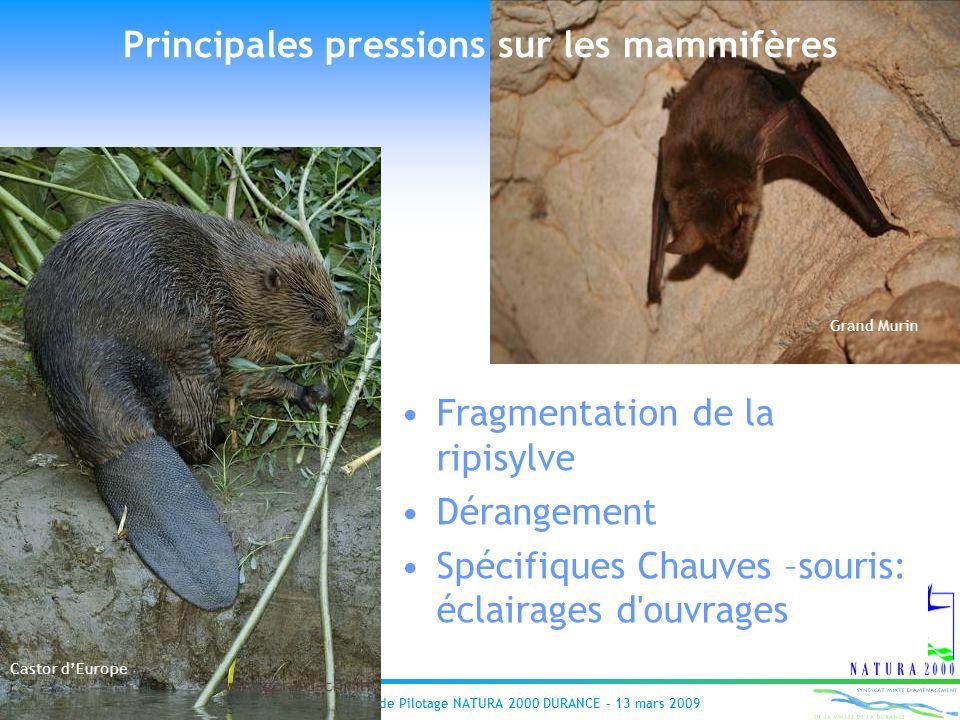 Principales pressions sur les mammifères