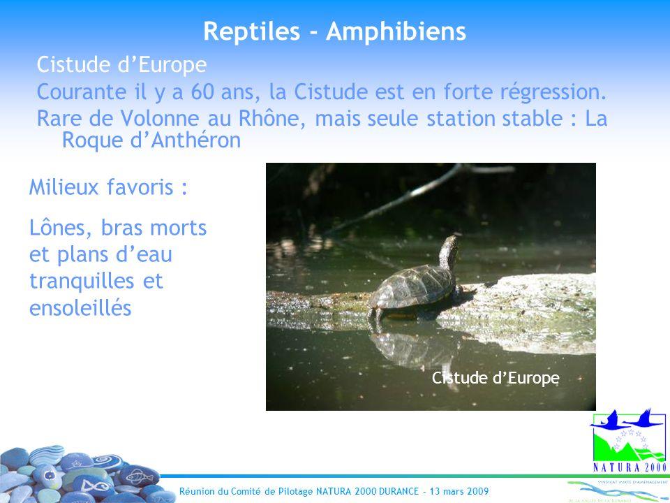 Reptiles - Amphibiens Cistude d'Europe