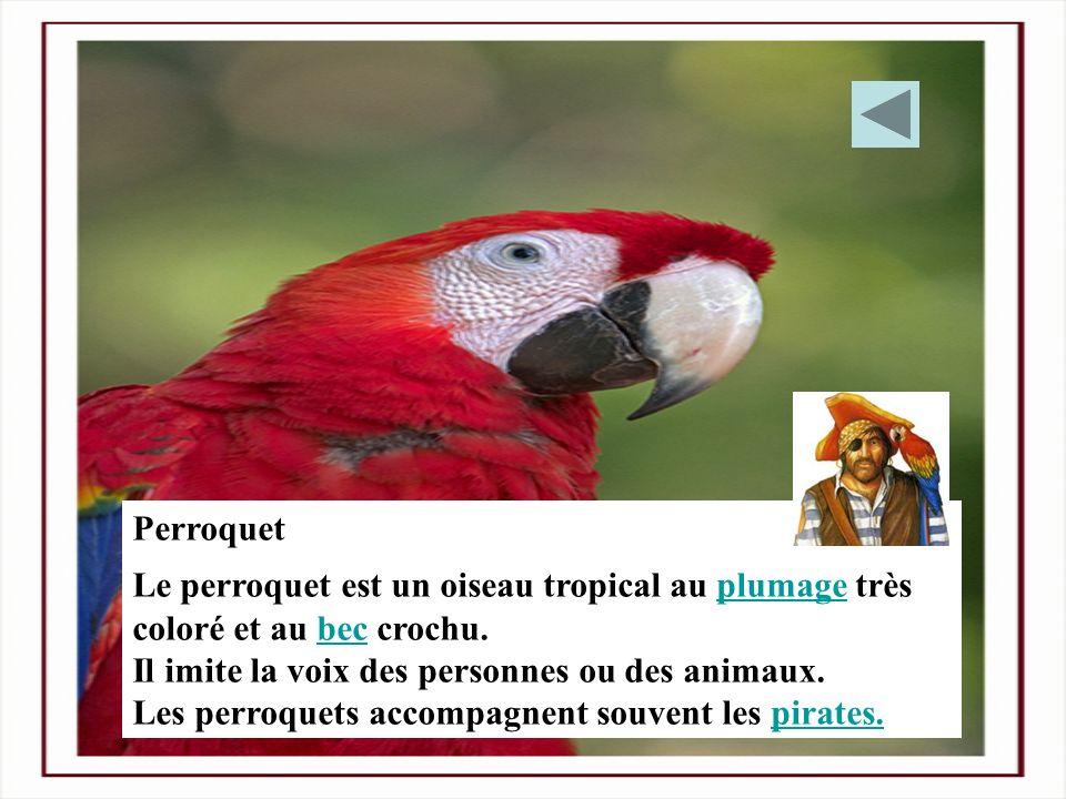 Perroquet Le perroquet est un oiseau tropical au plumage très coloré et au bec crochu. Il imite la voix des personnes ou des animaux.