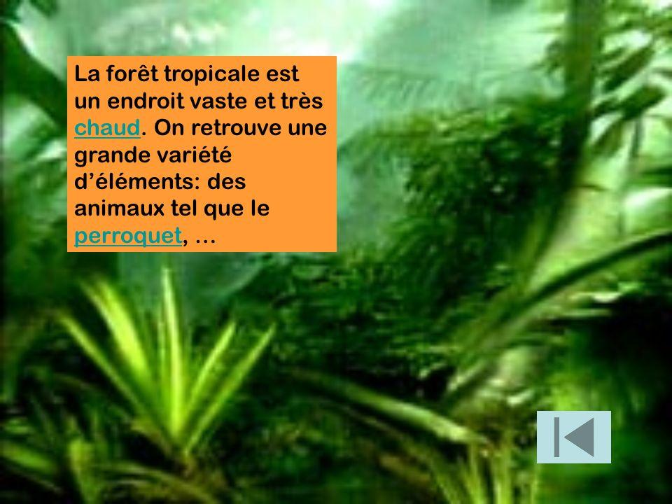 La forêt tropicale est un endroit vaste et très chaud