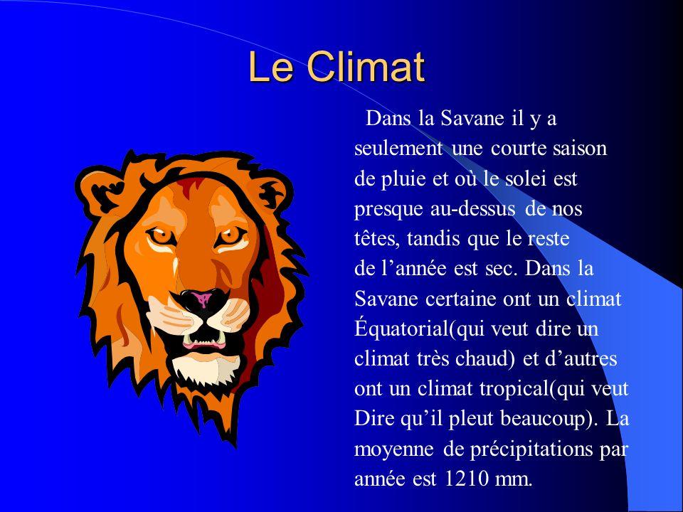 Le Climat Dans la Savane il y a seulement une courte saison