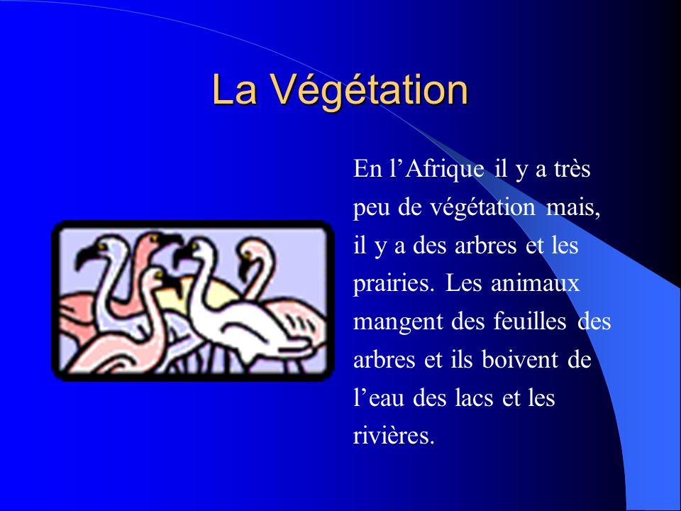 La Végétation En l'Afrique il y a très peu de végétation mais,
