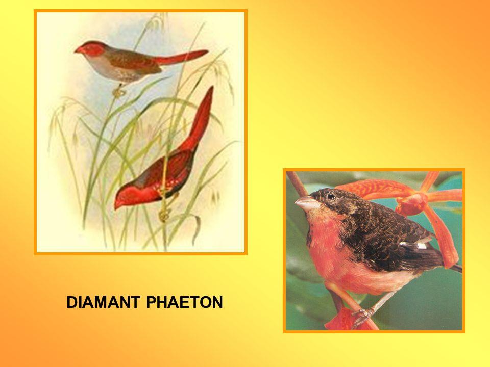 DIAMANT PHAETON