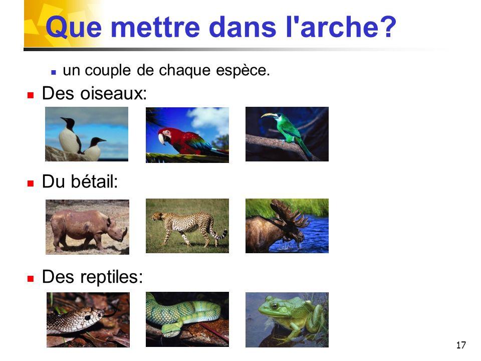 Que mettre dans l arche Des oiseaux: Du bétail: Des reptiles: