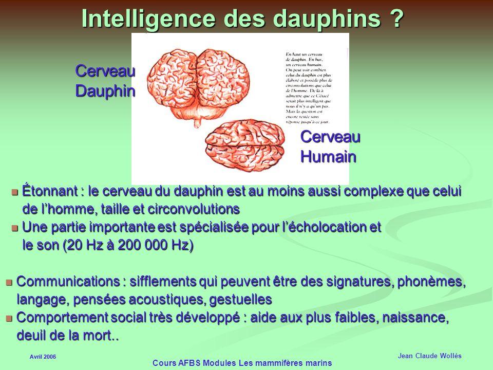 Intelligence des dauphins