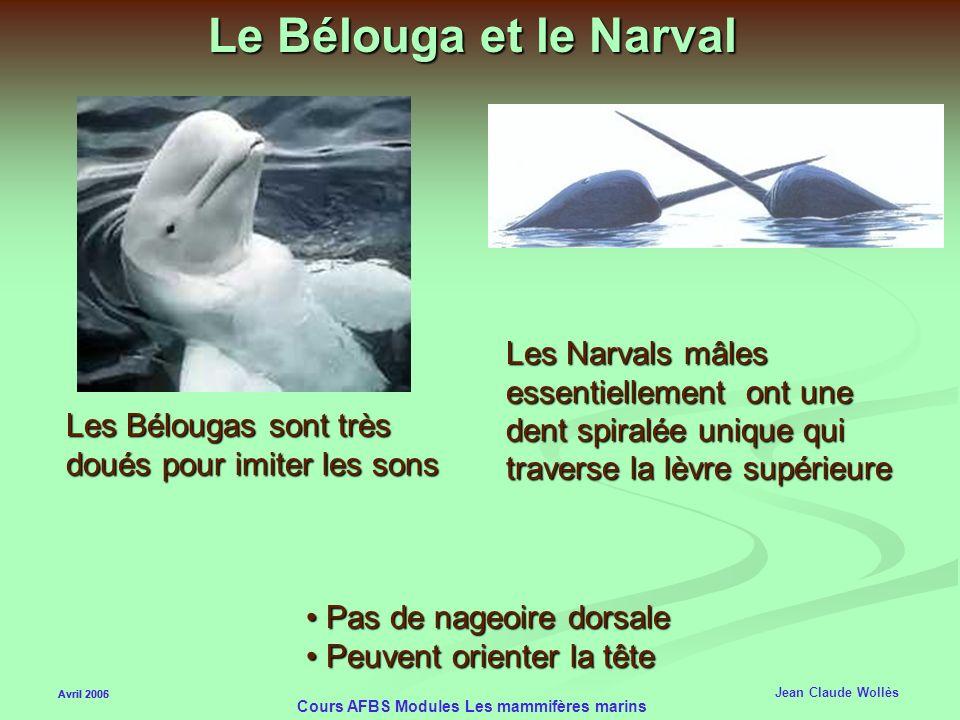 Cours AFBS Modules Les mammifères marins