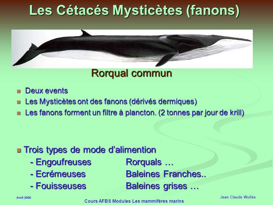 Les Cétacés Mysticètes (fanons)