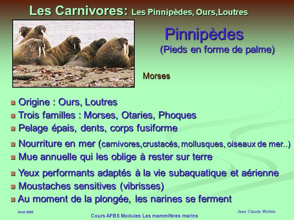 Les Carnivores: Les Pinnipèdes, Ours,Loutres