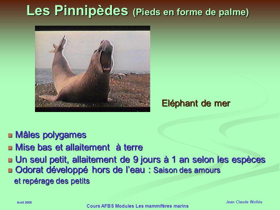 Les Pinnipèdes (Pieds en forme de palme)