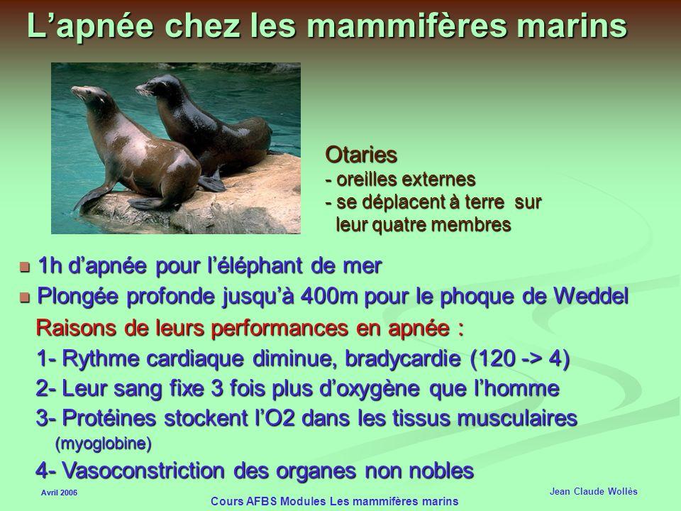 L'apnée chez les mammifères marins