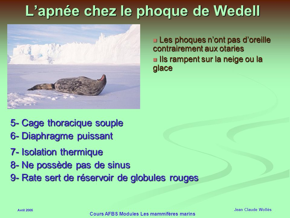 L'apnée chez le phoque de Wedell