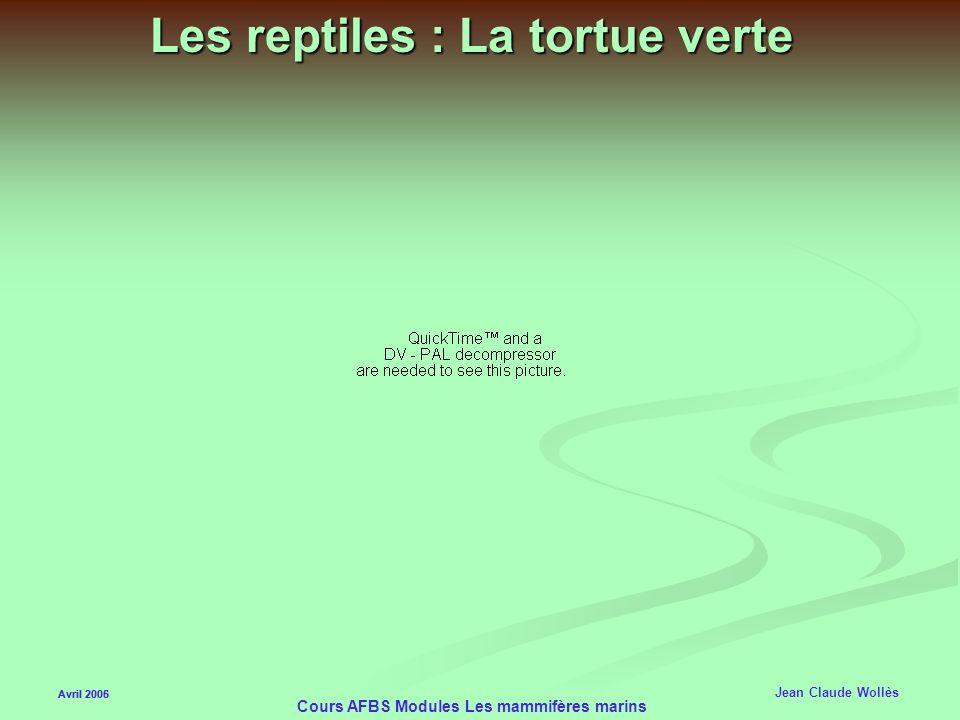 Les reptiles : La tortue verte