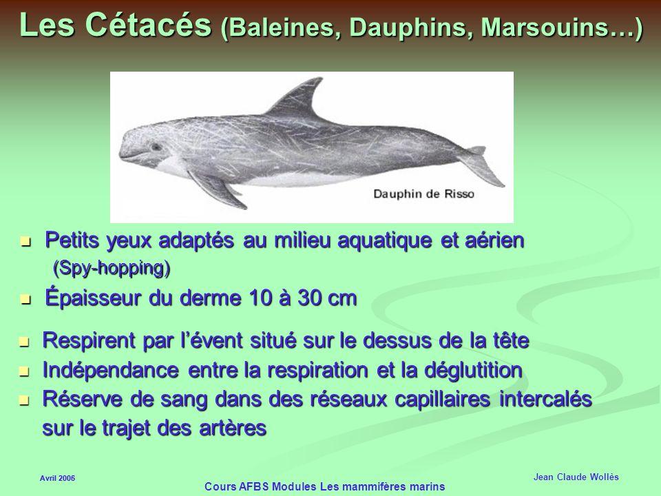 Les Cétacés (Baleines, Dauphins, Marsouins…)