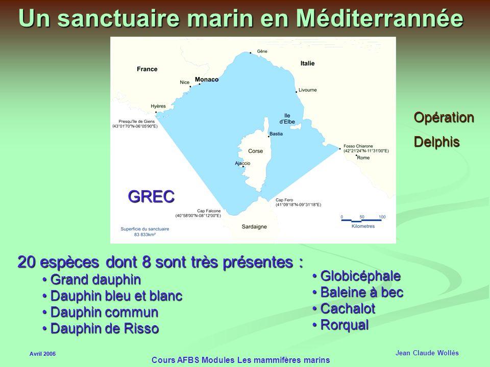 Un sanctuaire marin en Méditerrannée
