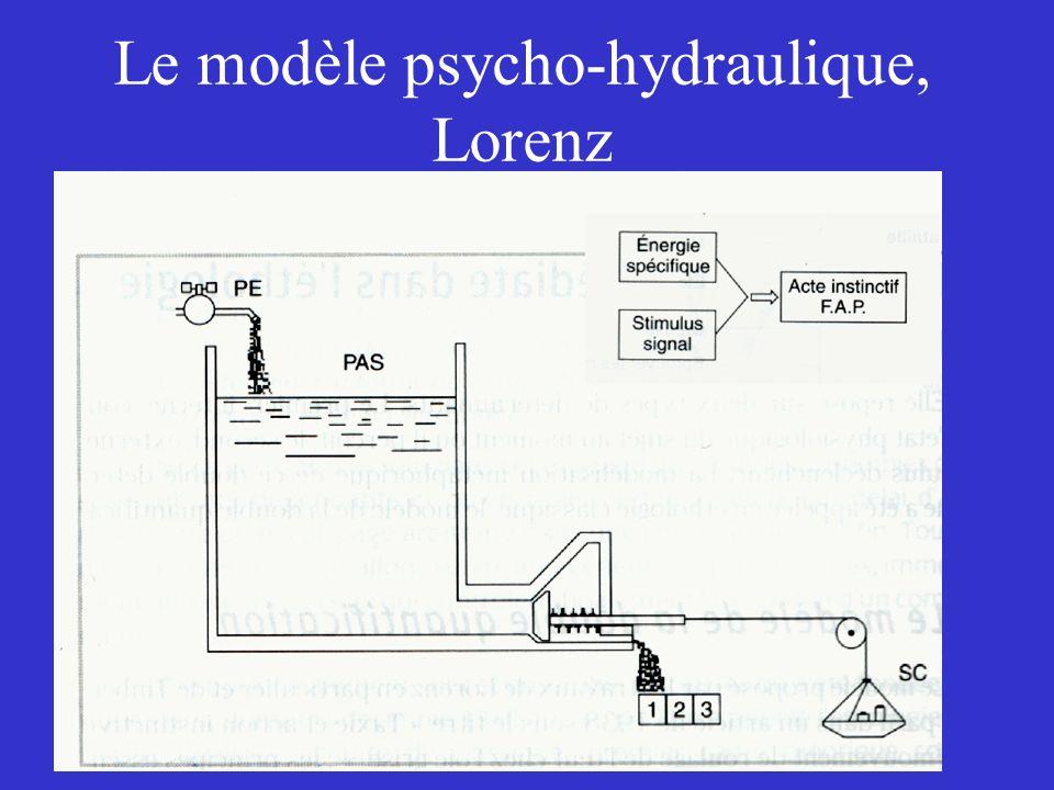 Le modèle psycho-hydraulique, Lorenz