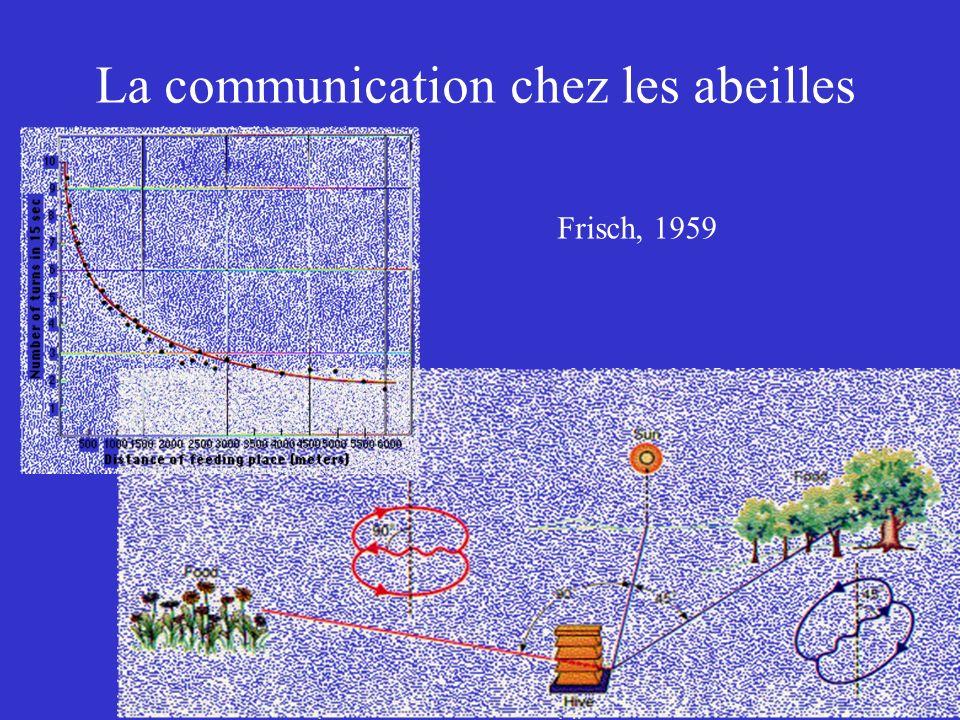 La communication chez les abeilles
