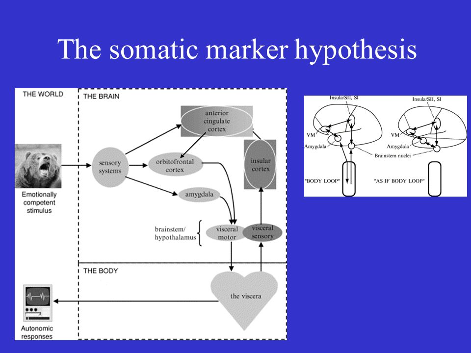 The somatic marker hypothesis