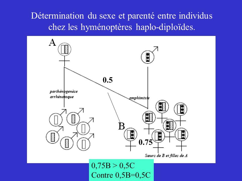 Détermination du sexe et parenté entre individus chez les hyménoptères haplo-diploïdes.