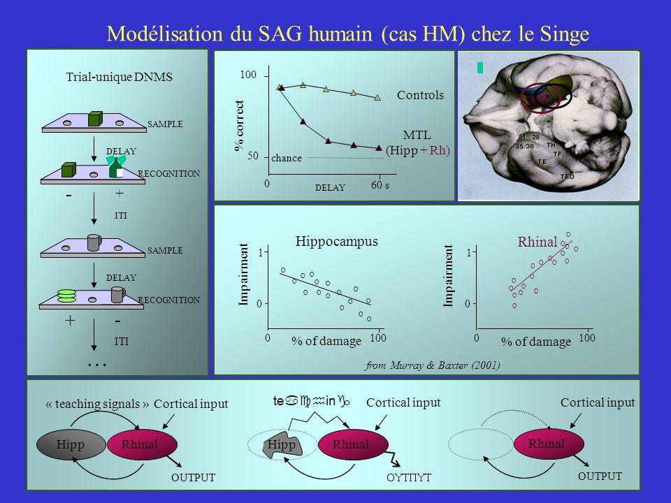 Modélisation du SAG humain (cas HM) chez le Singe