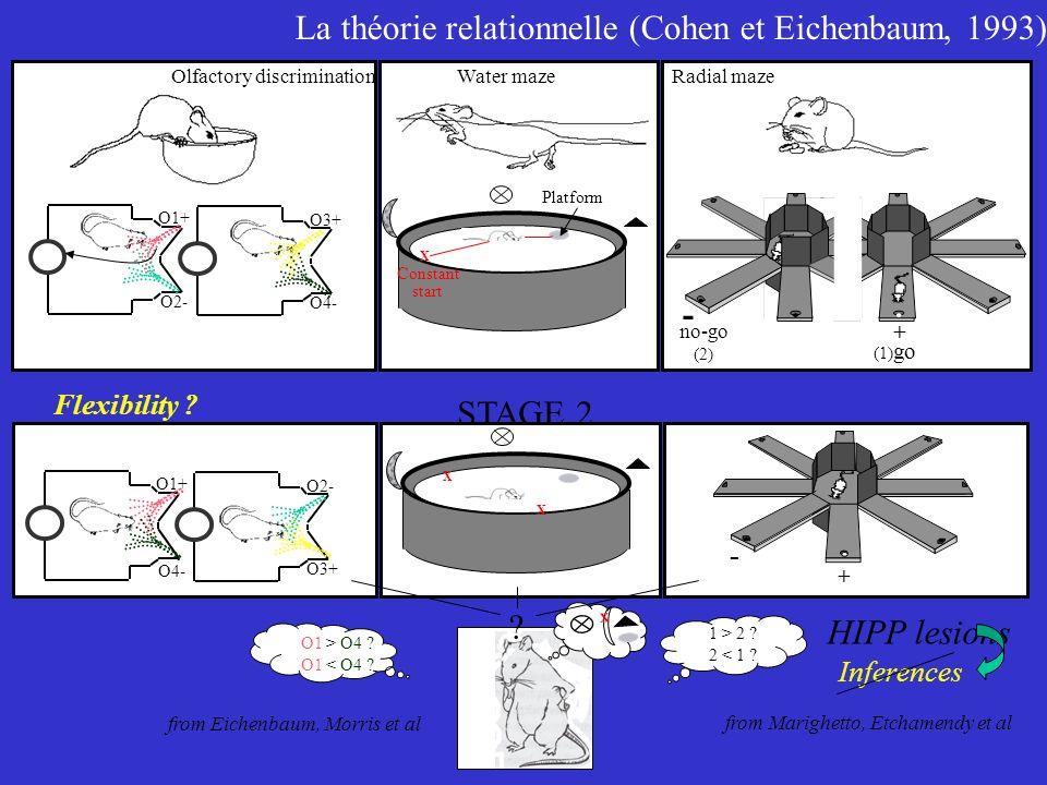 La théorie relationnelle (Cohen et Eichenbaum, 1993)