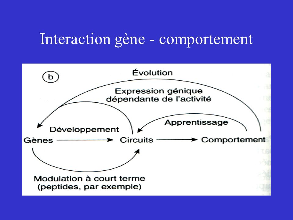 Interaction gène - comportement