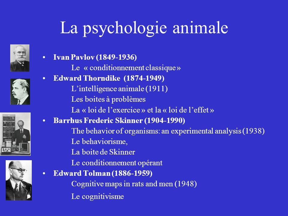 La psychologie animale