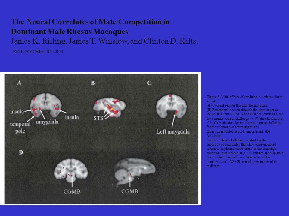 The Neural Correlates of Mate Competition in