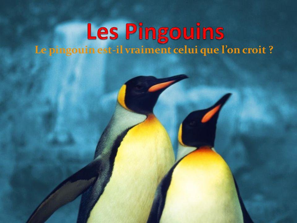 Le pingouin est-il vraiment celui que l'on croit