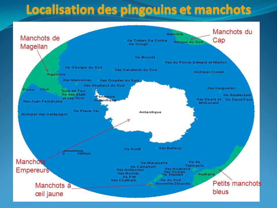 Localisation des pingouins et manchots