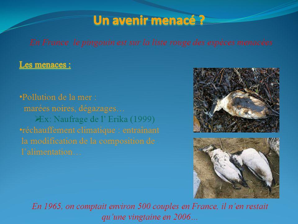 En France le pingouin est sur la liste rouge des espèces menacées