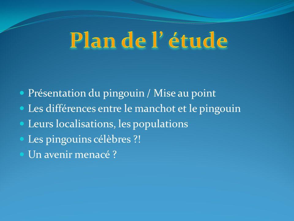 Plan de l' étude Présentation du pingouin / Mise au point