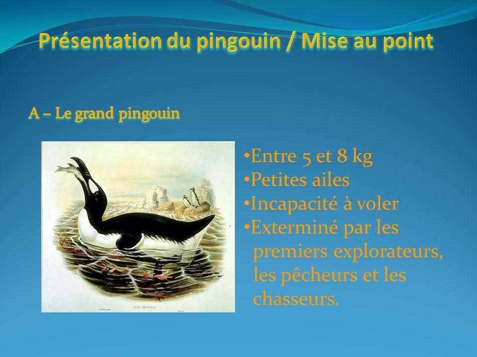 Présentation du pingouin / Mise au point