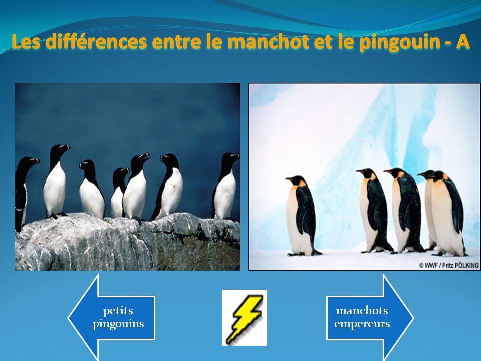 Les différences entre le manchot et le pingouin - A
