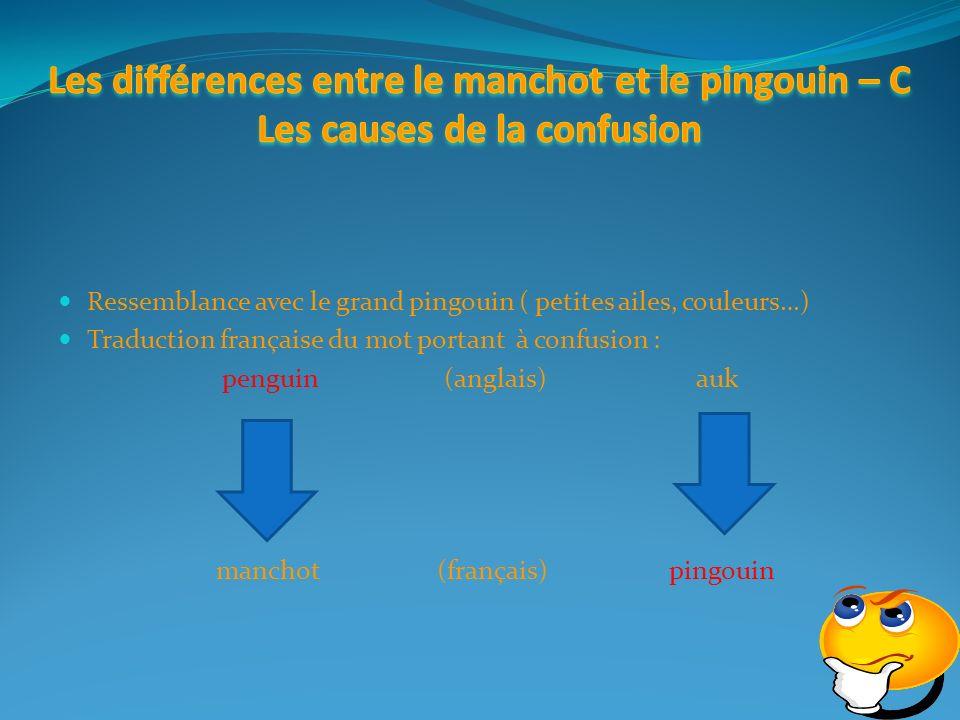manchot (français) pingouin