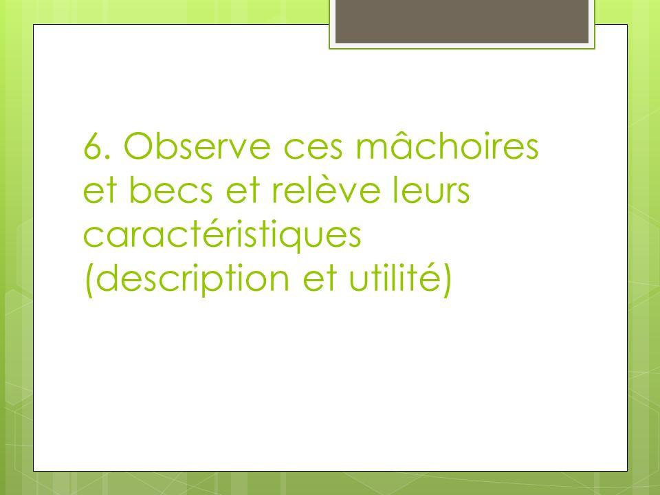 6. Observe ces mâchoires et becs et relève leurs caractéristiques (description et utilité)