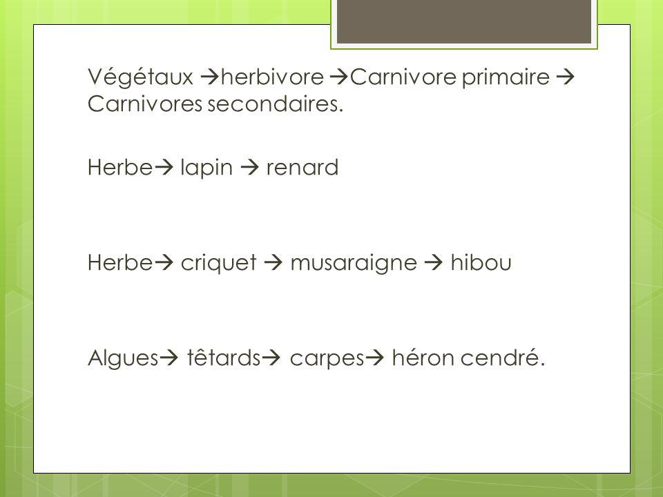 Végétaux herbivore Carnivore primaire  Carnivores secondaires.