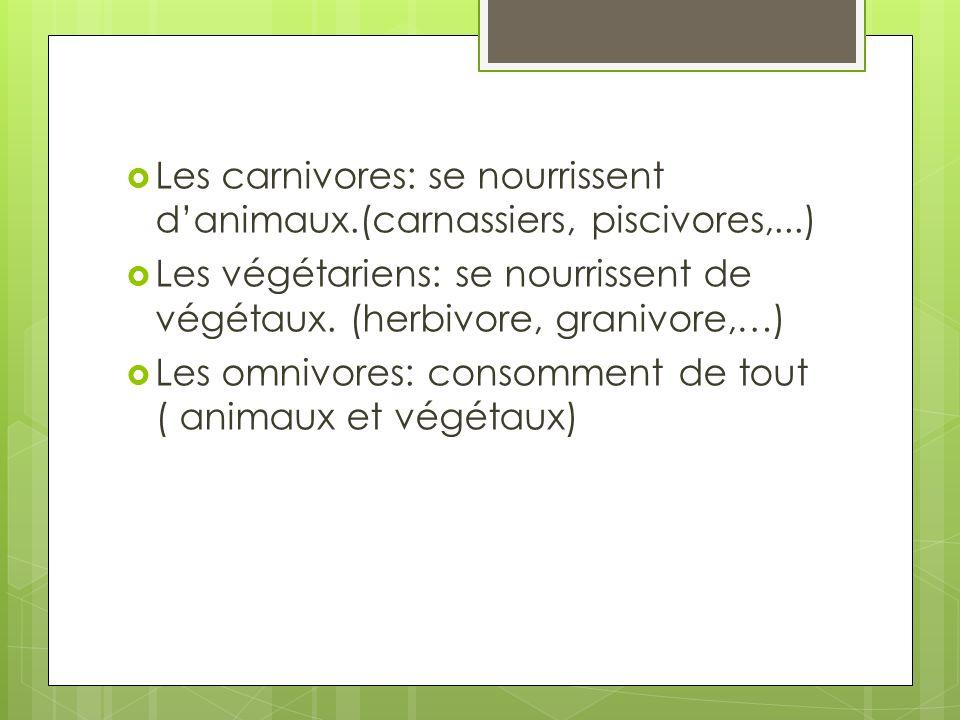 Les carnivores: se nourrissent d'animaux.(carnassiers, piscivores,...)