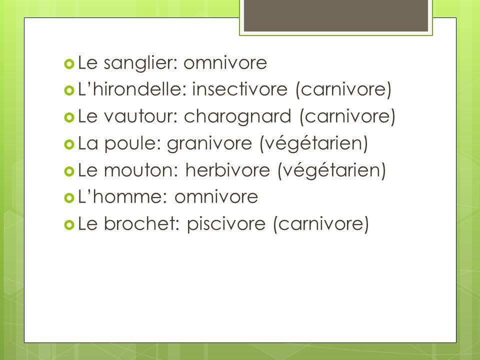 Le sanglier: omnivore L'hirondelle: insectivore (carnivore) Le vautour: charognard (carnivore) La poule: granivore (végétarien)