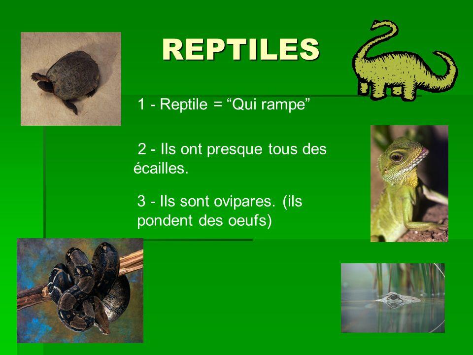 REPTILES 1 - Reptile = Qui rampe
