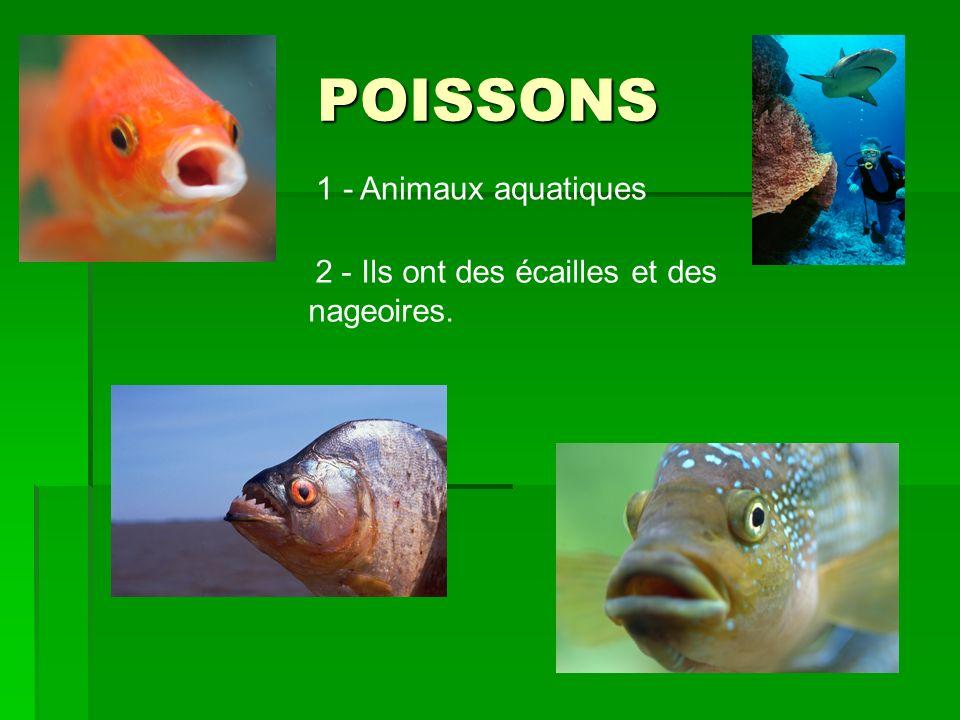 POISSONS 1 - Animaux aquatiques